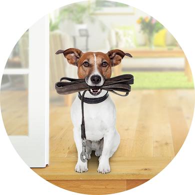 dog ready with leash