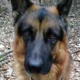 dog walker - Ari