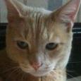 cat sitter - friskie