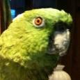 pet sitting - paulo