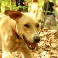 dog trainer - erik