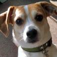 puppy trainer - jack