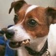 dog sitting - jill