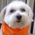puppy trainer - oliver