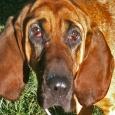 manchester ct dog sitter - olivia