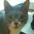 cat sitter - percy