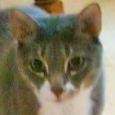 wethersfield ct cat sitter - violet