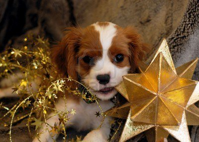 Puppy with star